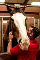 CPR Clydesdales_229672_11-30-2016